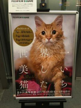 「世界一美しい猫たち」五十川満 写真展を見に六本木ミッドタウンに行ってきた