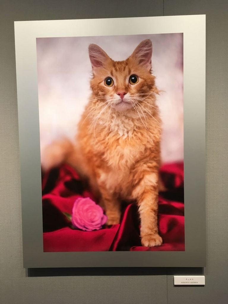 五十川満 写真展「世界一美しい猫たち」を見に六本木に行ってきた03