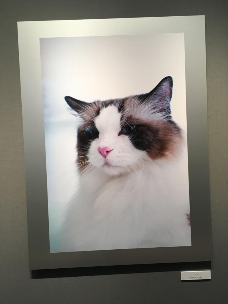 五十川満 写真展「世界一美しい猫たち」を見に六本木に行ってきた04