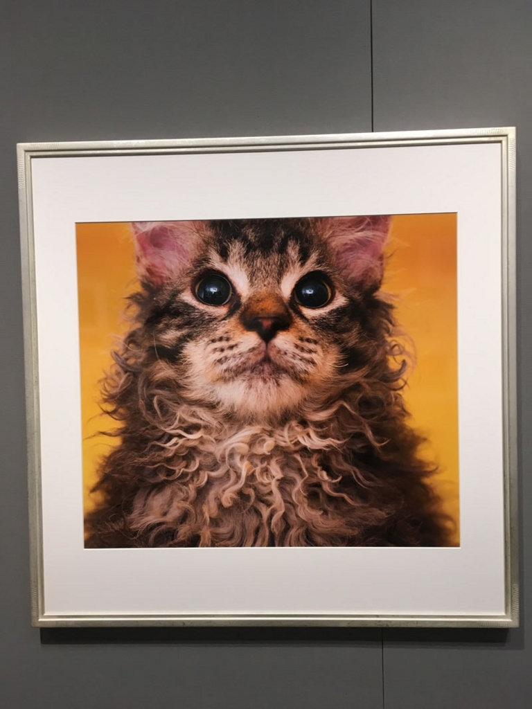 五十川満 写真展「世界一美しい猫たち」を見に六本木に行ってきた06
