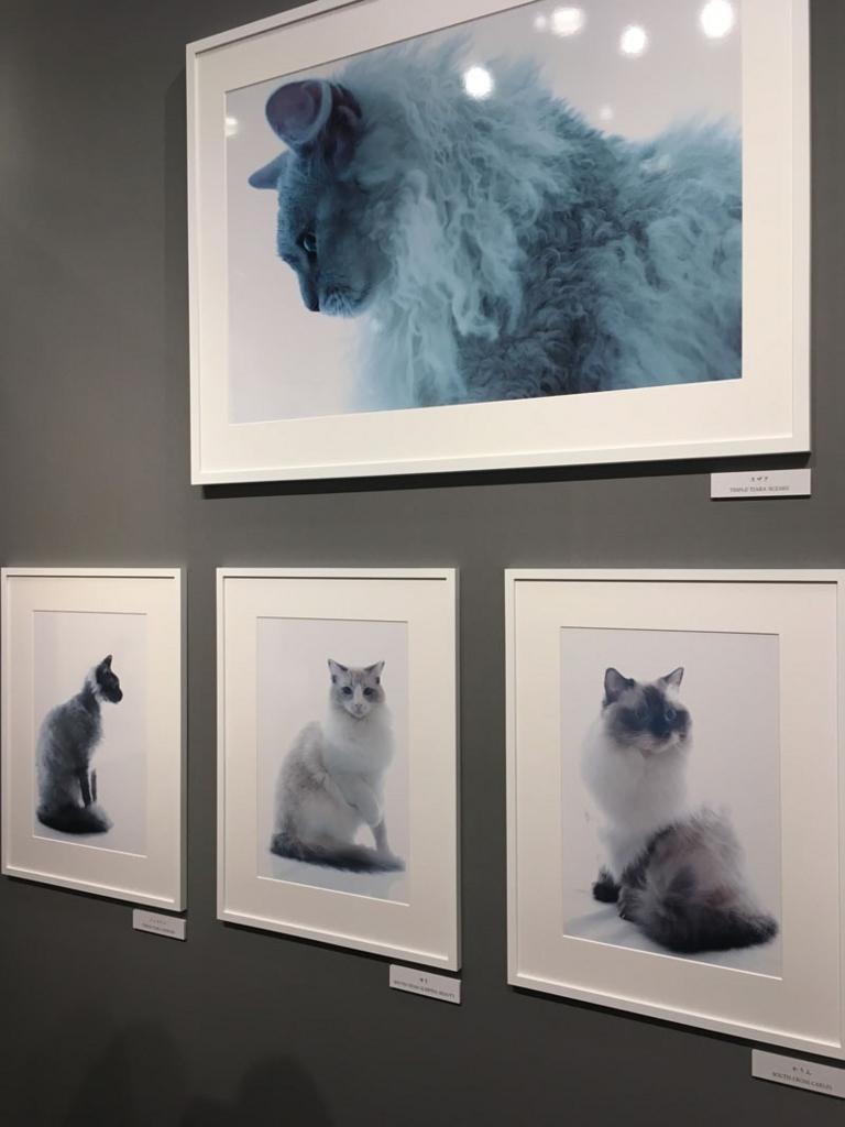 五十川満 写真展「世界一美しい猫たち」を見に六本木に行ってきた08